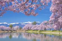 長野県 六道の堤より中央アルプス