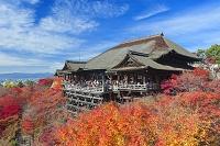 京都府 紅葉の清水寺の本堂