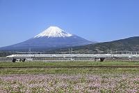 静岡県 富士山と新幹線とレンゲ畑
