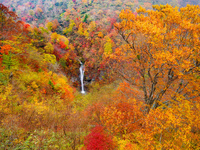 栃木県 那須高原 駒止の滝