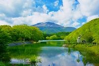 宮城県 新緑の長老湖