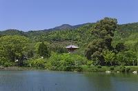 京都 嵯峨野 大覚寺
