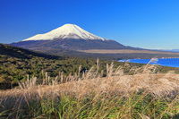 山梨県 三国峠ススキ原より山中湖と富士山