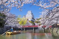 兵庫県 桜咲く春の姫路城と内濠