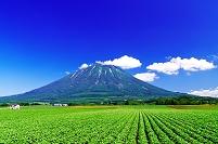 北海道 初夏の羊蹄山と広いジャガイモ畑