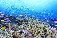 パプアニューギニア トゥフィ サンゴ礁