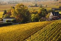フランス アキテーヌ地方のブドウ畑