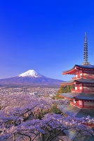 山梨県 新倉浅間神社 朝の富士山と忠霊塔(戦没者慰霊塔)