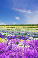 長野県 松本市 信州花フェスタの花畑と環水平アーク