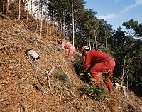 林業 植林
