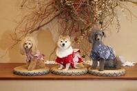 浴衣を着たトイプードルと豆柴犬