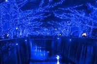 東京都 目黒川イルミネーション 青の洞窟