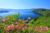 青森県 瞰湖台付近よりムラサキヤシオ咲く十和田湖展望