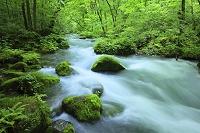 青森県 奥入瀬渓流 石ヶ戸の流れ 新緑