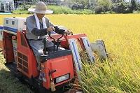 コンバインで稲を刈る日本人男性