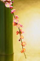 青竹と紅梅