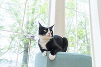 椅子の上で見つめる猫
