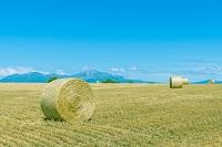 北海道 美瑛町 干し草ロールと山並み