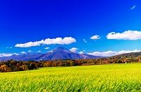 北海道 広大な燕麦の畑と冠雪したニセコ連峰