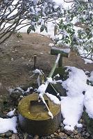 京都 龍安寺雪景色