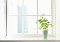 窓辺に置かれた観葉植物