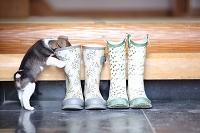 子犬と長靴