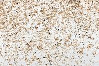 土をつくる粒 粘土