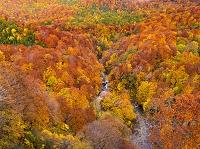 青森県 紅葉と城ヶ倉渓谷