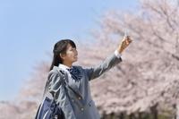 桜と写真を撮る女子中学生