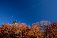 秋田県 飛行機雲