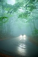 青森県 新緑の霧の道と自動車