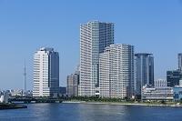 東京都 豊洲のビル群と東京スカイツリー