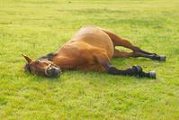 眠そうな馬