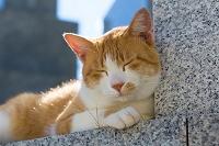 広島県 尾道の猫