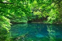山形県 新緑の湧水池 丸池様