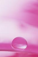 ガーベラの花ビラと水滴
