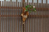 妻籠宿の花飾り