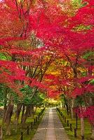 京都市  鹿王院の紅葉