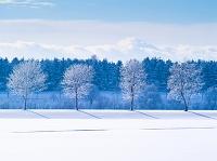 北海道 札幌市 樹氷の並木 モエレ沼公園