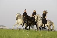馬  アンダルシアン種