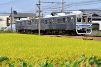大阪府 水間鉄道 色づいた田園地帯を走る1000系普通電車