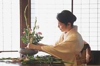 華道をする着物日本人女性