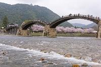 山口県 サクラ咲く錦川と錦帯橋と岩国城