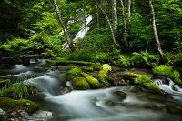 北海道 白金不動の滝