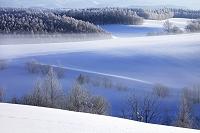 北海道 美瑛町 凍て付いた朝の丘