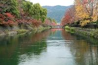 秋の岡崎疎水 洛東 京都