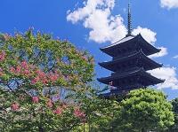 京都府 サルスベリ咲く東寺