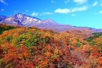 栃木県 日光市 霧降高原の紅葉