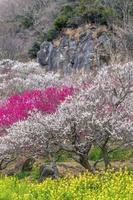 神奈川県 湯河原梅林