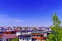 北海道 白樺の新緑と住宅地の家並み